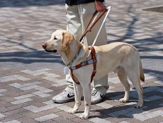 99554849-service-dog-puppy-raisers-632x475
