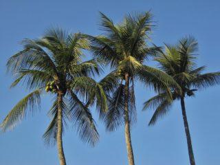 royal-palms-1225858_960_720
