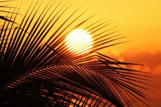sun-of-jamaica